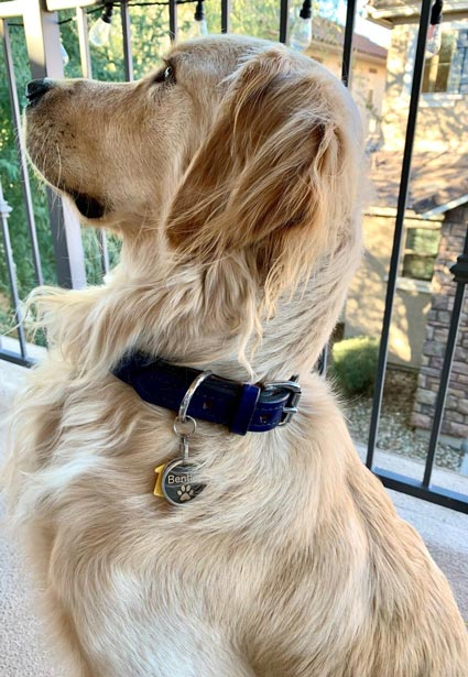 Blue cool leather dog collar.